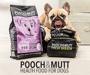 cshow Four legged friends | The best nutrition for all dogs online