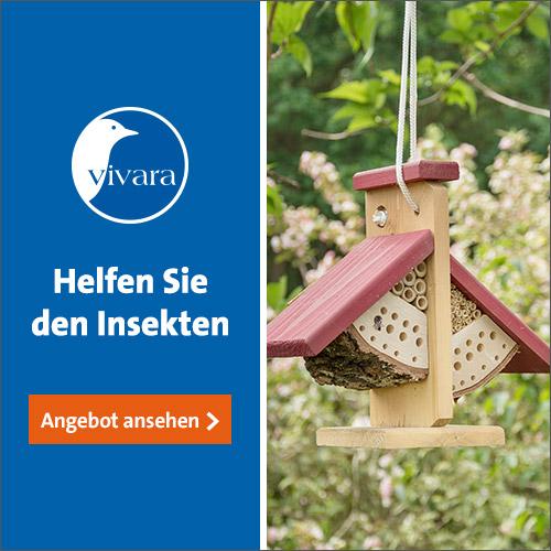 Artenschutz auf dem Balkon: Bienenfreundliche Balkonpflanzen 5