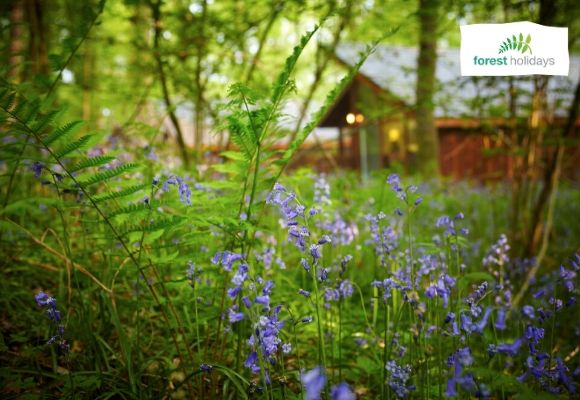 15 Best Reasons To Book A Luxury Log Cabin Holiday