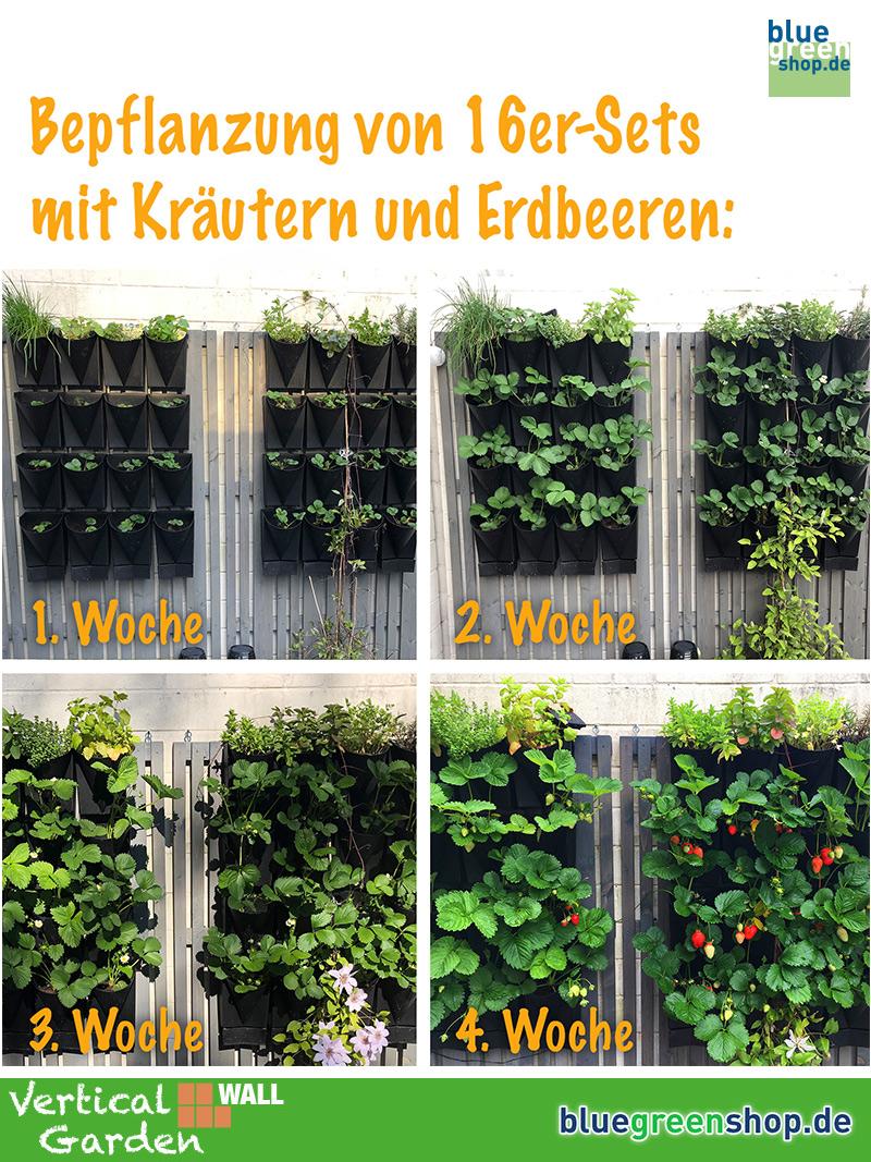 Gemüse selber anbauen - ganz einfach 4